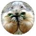 marmotte toutauchocolat